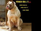 Протеин Power Bully