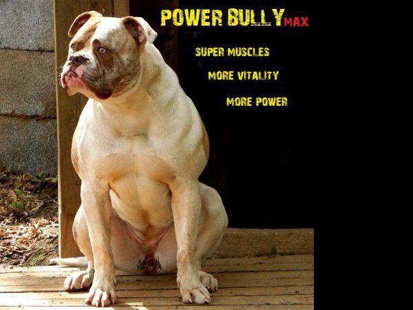 Протеин Power Bully