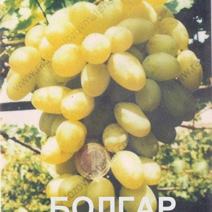 Продавам грозде Бoлгар